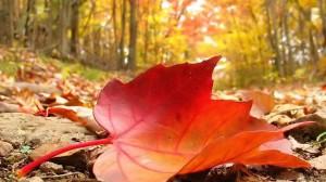 fall-autmumn-tree-leaves-autumn-falling-leaf-ad-591610 (2)