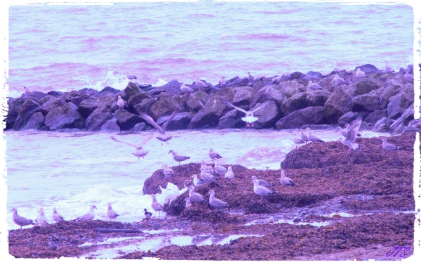 Walneybirds