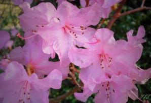 blossomscloseup