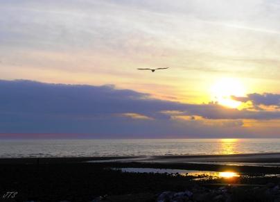 sun set1