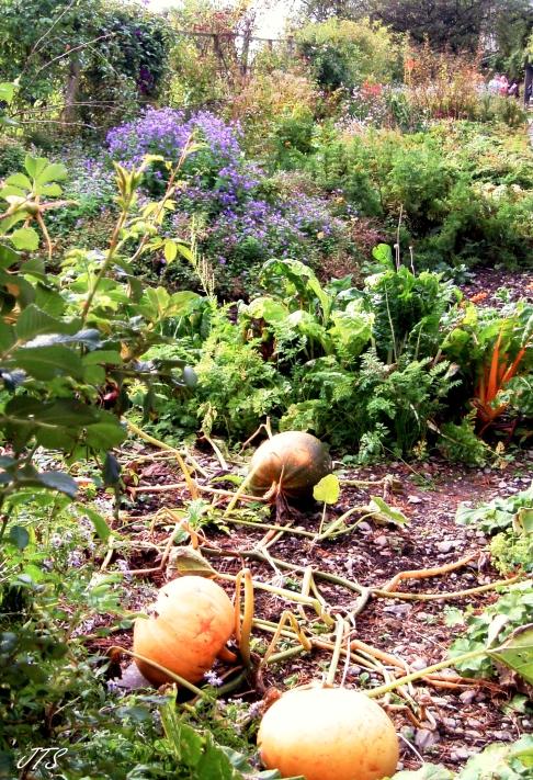 earthharvest