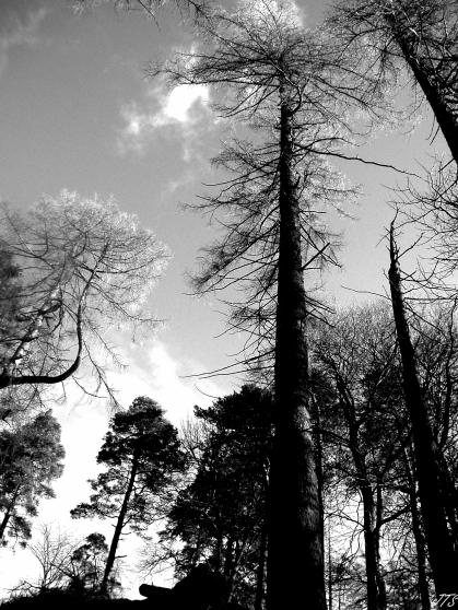 treesinlight