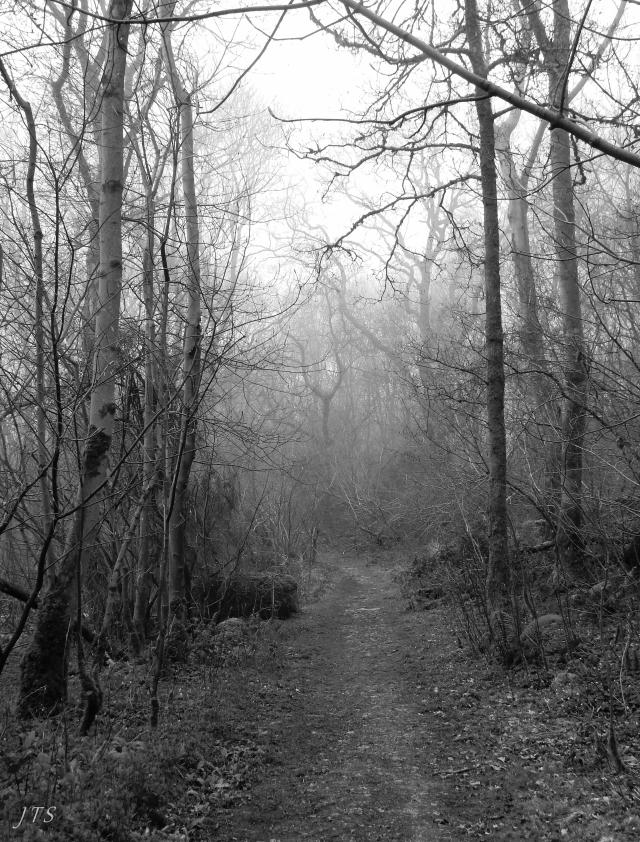 Mist at Sea Wood